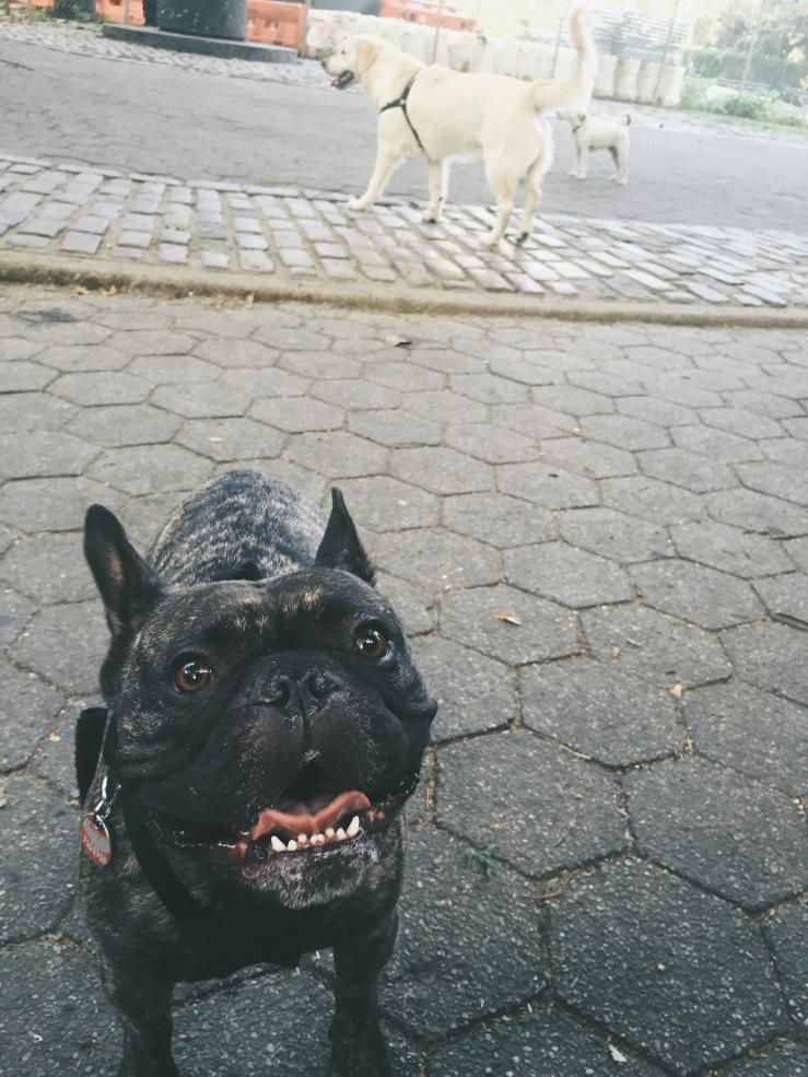 Hank enjoying his morning routine